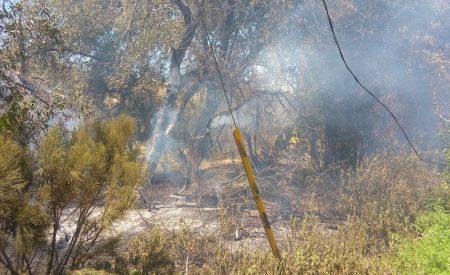 """""""El 99% de los incendios son provocados"""": Director de bomberos en Tecate"""