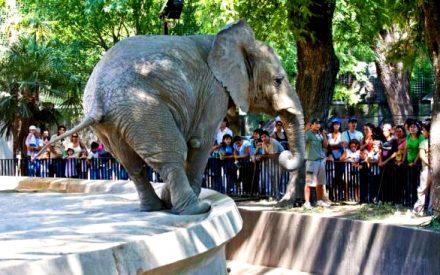 Reconvertirán edificios del Zoo en espacios interactivos.