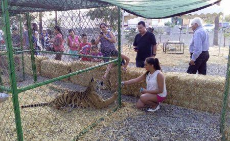 Se prohíben animales en circos pero no en la Mágica Feria de Tecate