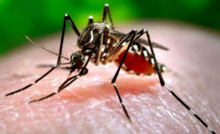 Se presenta primer caso de Zika en BC