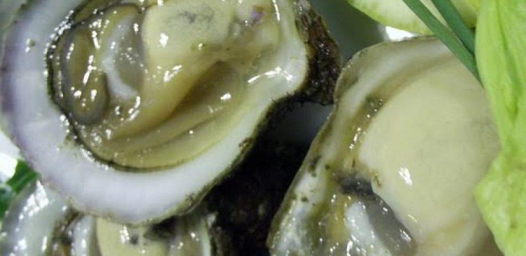 ALERTA: Veda sanitaria temporal para moluscos bivalvos