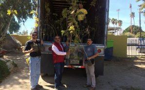Imdete inicia segunda etapa de campaña de reforestación