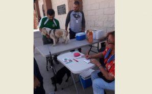 Exitosa jornada de vacunación antirrábica en Tecate