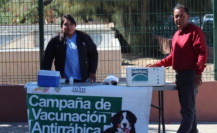 Aplicaron vacunas antirrábicas a mascotas en Tecate