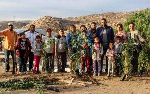 Gobierno de Tecate recupera espacios públicos y promueve campaña de reforestación