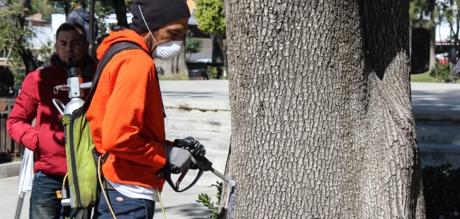 En jornada ecológica vacunan árboles y pinos del Parque Miguel Hidalgo.