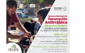 Vacunarán a mascotas en Tecate durante la Semana Nacional de Vacunación Antirrábica