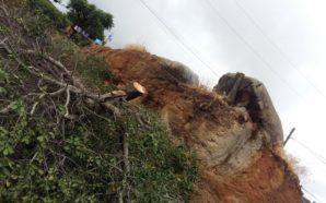 Aplican ejemplar sanción por tala de Encino